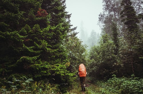 Waldführung
