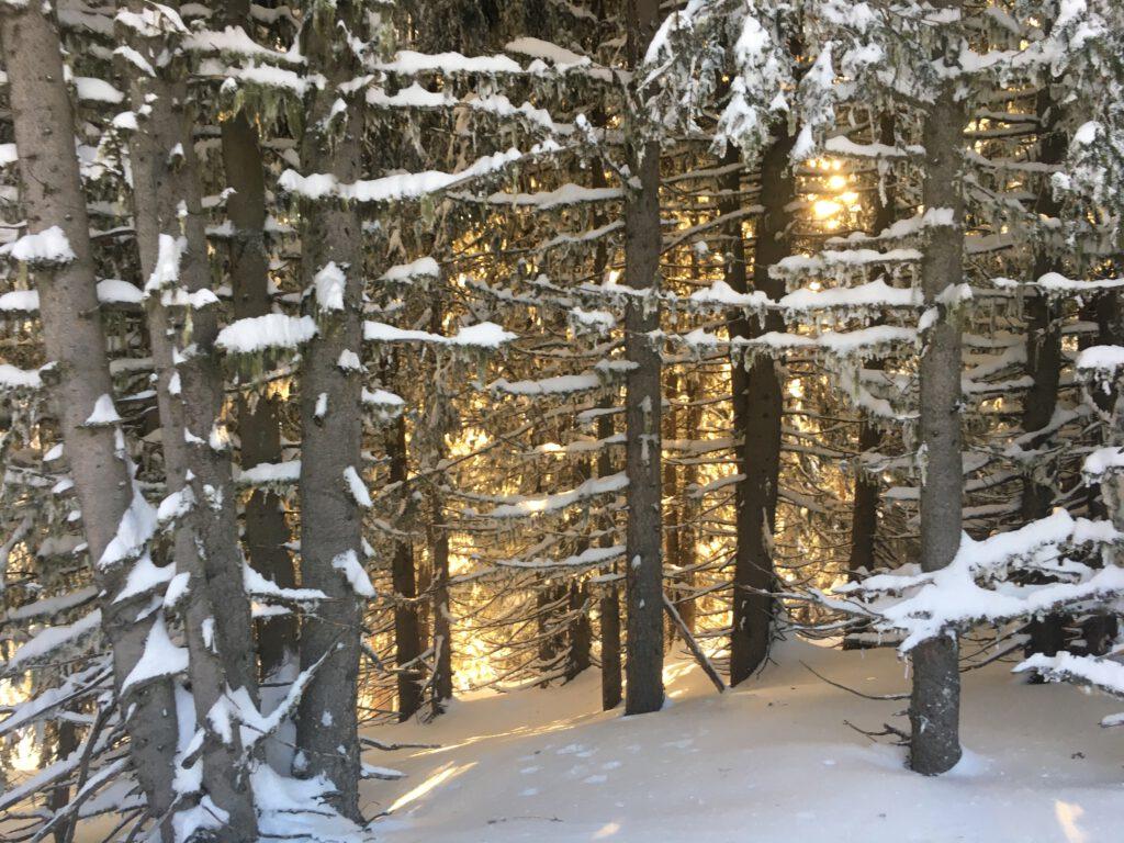 Wald im Wandel der Jahreszeiten Winterwald